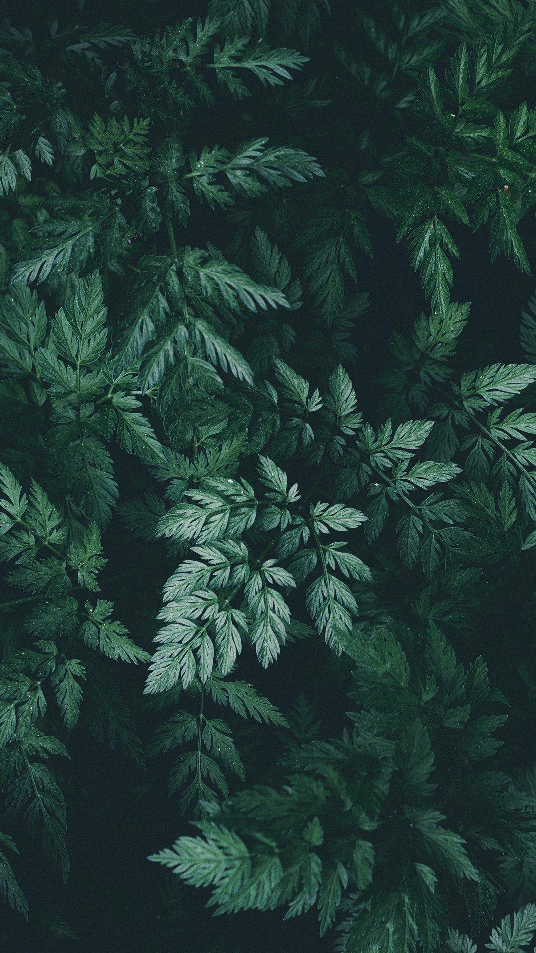 خلفيات ايفون 11 اشجار خضراء روعة Hd مربع