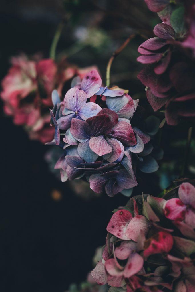خلفيات ايفون للموبايل زهور ورد جميلة للهاتف Hd 2020 مربع