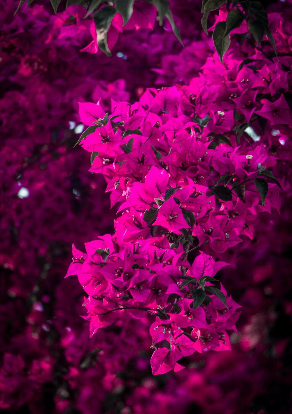 بنات كيوت خلفيات باللون الوردي للايفون
