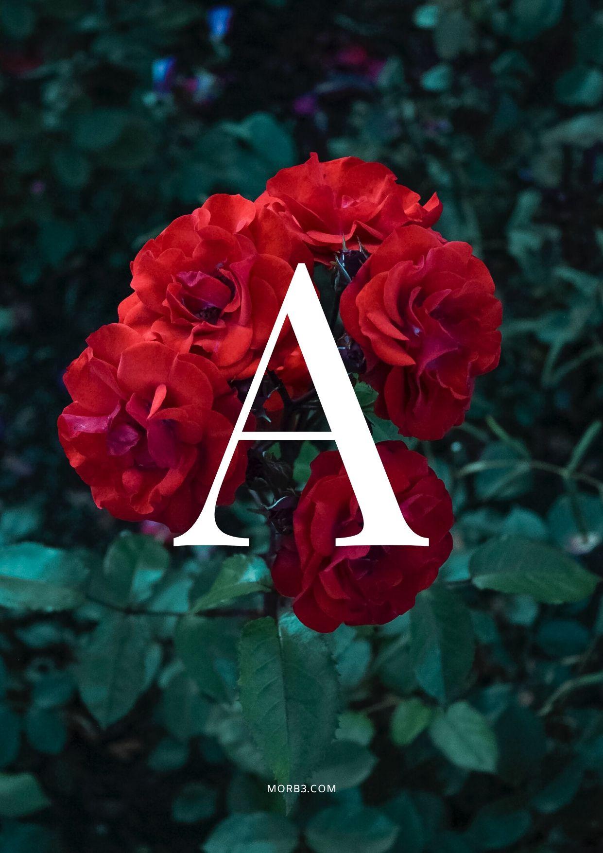 صور حرف A خلفيات حرف A خلفيات حرف A رومانسية اجمل حرف A في العالم حرف A بالورد حرف A احبك حرف A في قلوب حرف A مع كلام حب خلفيات حرف