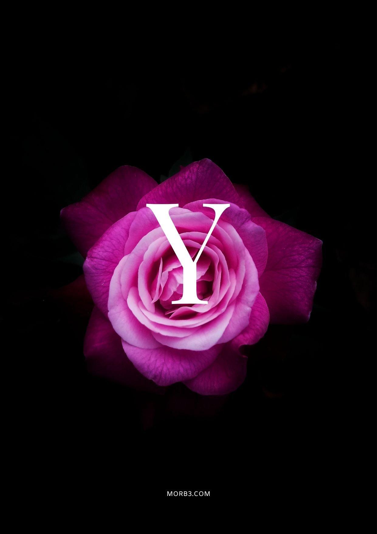 صور حرف Y خلفيات حرف Y خلفيات حرف Y رومانسية اجمل حرف Y في العالم حرف Y بالورد حرف Y احبك حرف Y في قلوب حرف Y مع كلام حب خلفيات حرف