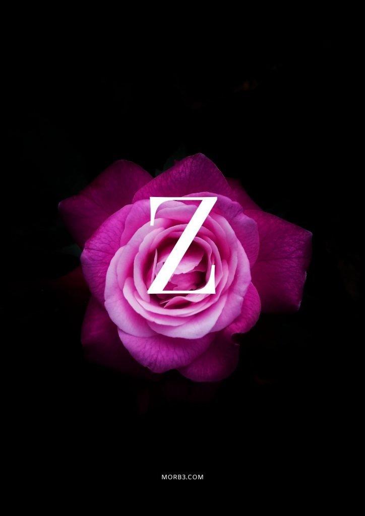 صور حرف Z خلفيات حرف Z خلفيات حرف Z رومانسية اجمل حرف Z في العالم حرف Z بالورد حرف Z احبك حرف Z في قلوب حرف Z مع كلام حب خلفيات حرف