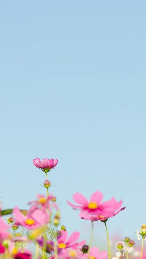 صور ورد خلفيات ورد صور ورد طبيعي صور ورد احمر صور ورد حلوه صور ورد جميل صوره ورد ص ورد صورثيمات ورد صور وردة الصور ورود صور ورد جوري اجمل صور ورد صور ورد ابيض الصور وراد صور وردتين باقه ورده اجمل ورود الحب ورود رومانسية ورود متحركة ورود طبيعية صور ورد متحركه صور ورد اسود صور ورد انستقرام صور ورد خلفيات صور ورد خلفية صور ورد ازرق صور ورد وقلوب صور ورد وردي صور ورد بنفسج صور ورد روعه صور ورد كيوت اجمل ورد طبيعي في العالم اجمل الصور وردة في العالم احلى صور ورد صور ورد طبيعى ورود رومانسية للاهداء خلفيات ورد طبيعي خلفيات ورد احمر خلفيات ورد جوري خلفيات ورد بنفسجي خلفيات ورد اسود خلفيات ورود جميله خلفيات ورد للواتس خلفيات ورد كيوت خلفيات وورد خلفيه ورود خلفيات ورد ابيض خلفيات ورد اصفر خلفيات ورد أزرق خلفيات ورد طبيعي روعة تحميل صور ورد تنزيل صور ورد خلفيات ورد حلوه ورد طبيعي رمزيات ورود ورود جميله ورد جميل صورة وردة صورورد اجمل ورود ورد حب ورد الحب وردة حب تحميل ورود خلفيات ورود رمزيات ورد باقة ورد اصفر وردة بنفسج صور الورده صور لورد طبيعى صور زهور خلفيات زهور خلفيات موبايل ايفون للهاتف للجوال زهور جميلة جدا صور ورد أحمر صور خلفيات ورد ورود خلفية flowers images wallpapers beautiful red flower images rose wallpapers for love flowers wallpapers hd 2020